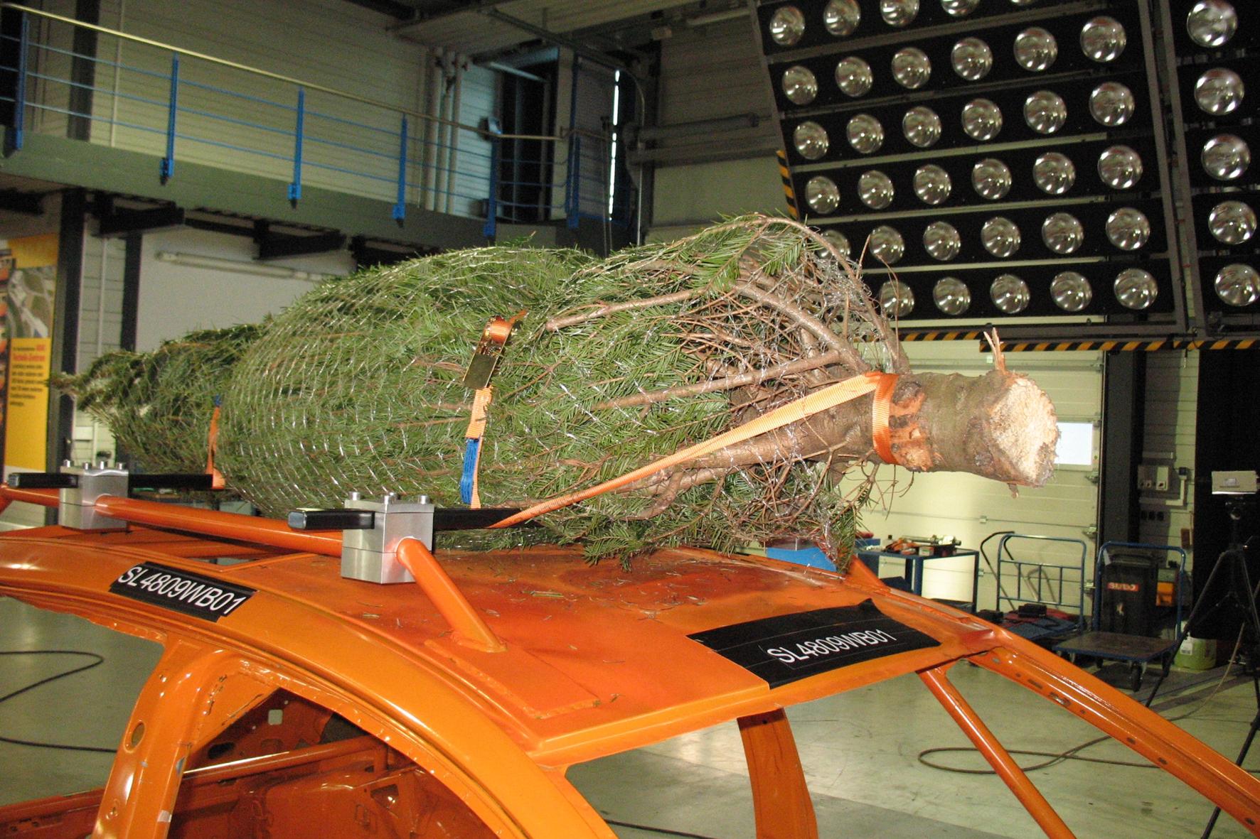Weihnachtsbaum-Transport mit dem Pkw