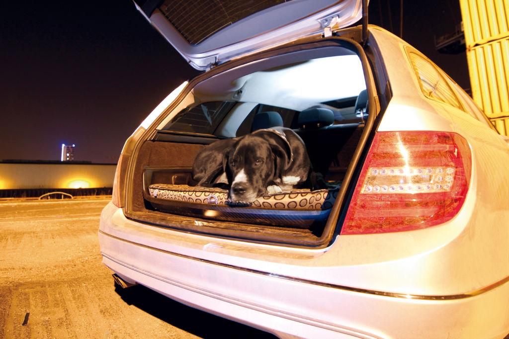 Die besten Autos für Hundebesitzer: So fühlen sich Vierbeiner wohl