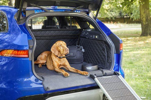 So reisen Haustiere sicher mit